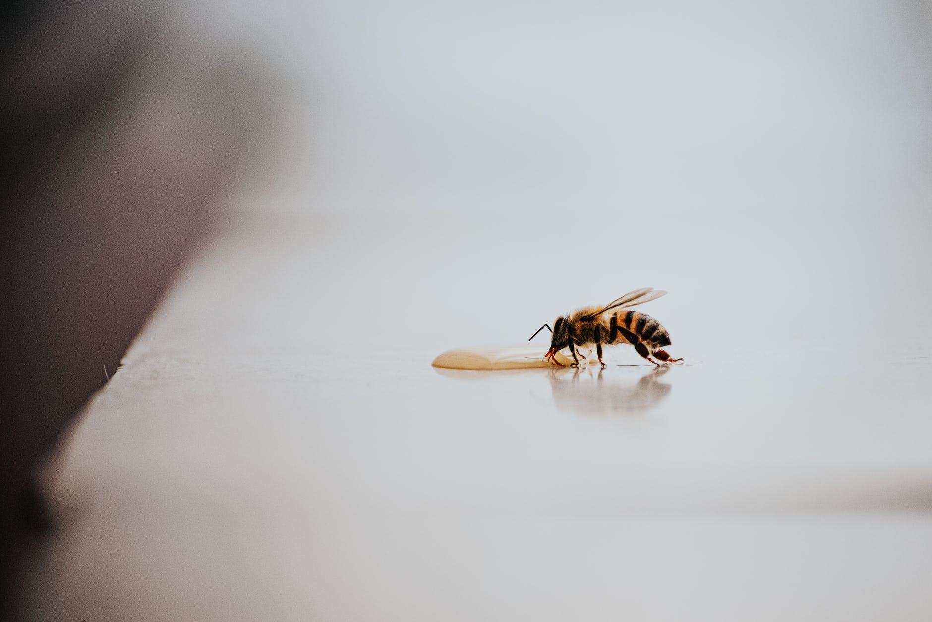 best organic raw honey
